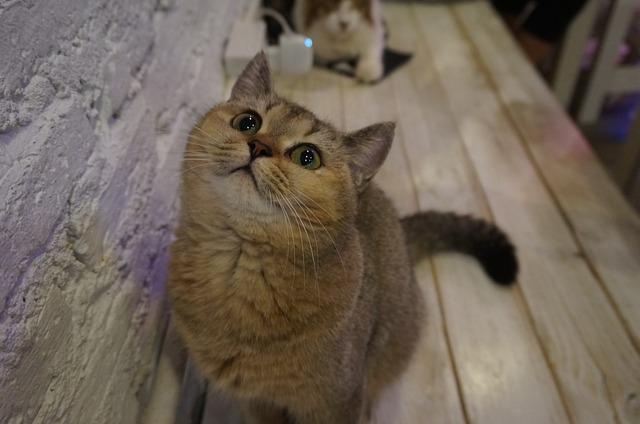 החתול שלכם משלשל