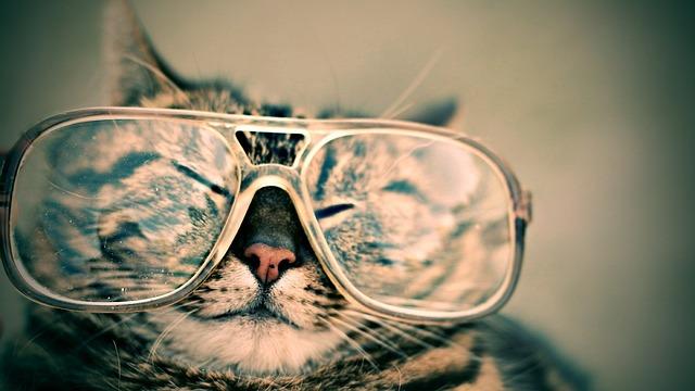 איך להתאים משקפיים לפנים?