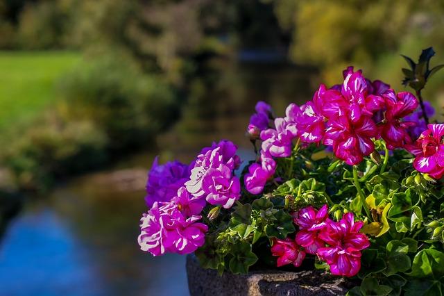 איך פרחי באך יכולים לעזור לנו לעבור את החורף?