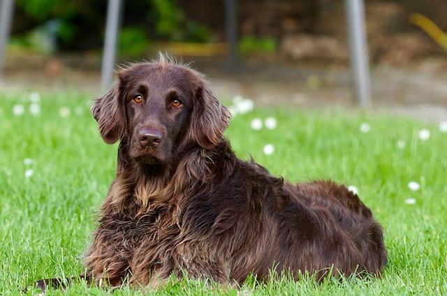 חשיבותו של חיסון המשושה אצל כלבים