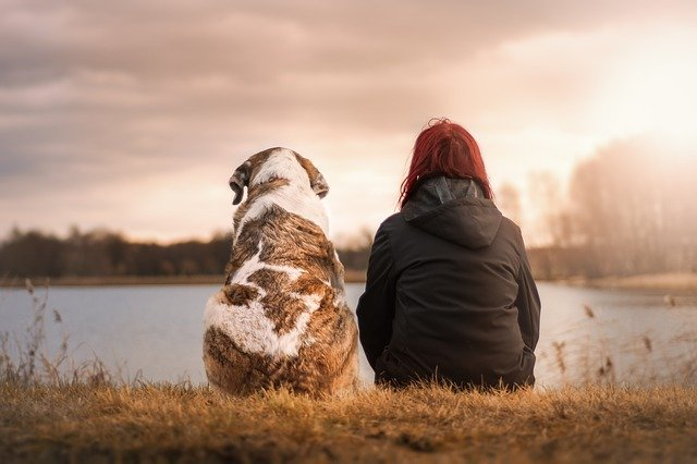 המתת חסד לכלבים