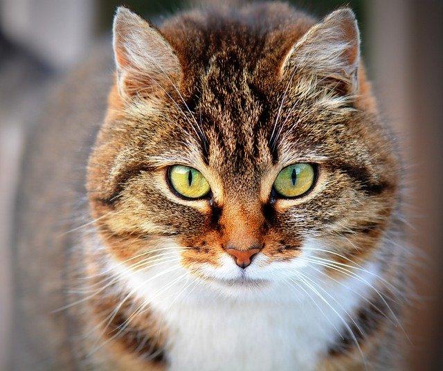 שימורים ומעדנים בריאים לחתול