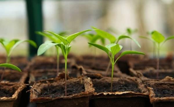 גידול צמחים בבית